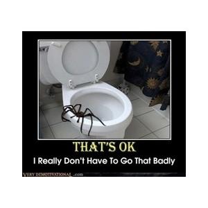 toiletspider