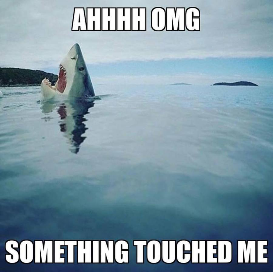 10 Reasons Why We Are Obsessed with SharkWeek