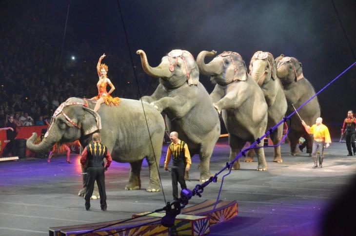 elephantshow