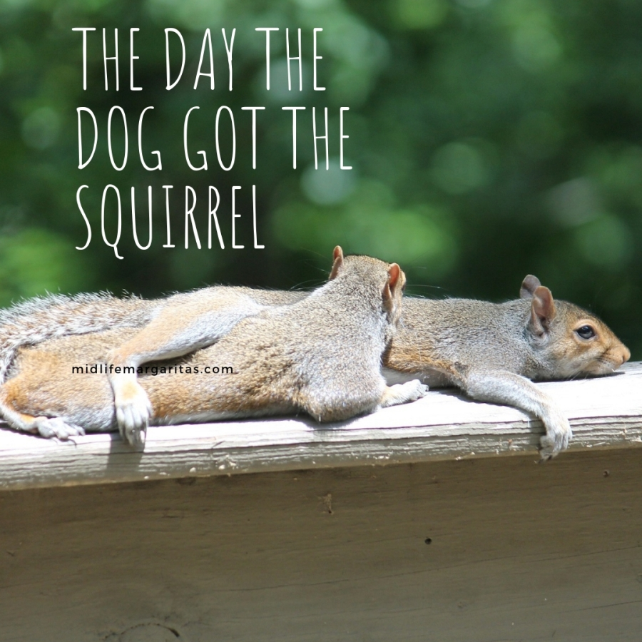 Squirrel – 0  Dog – 1