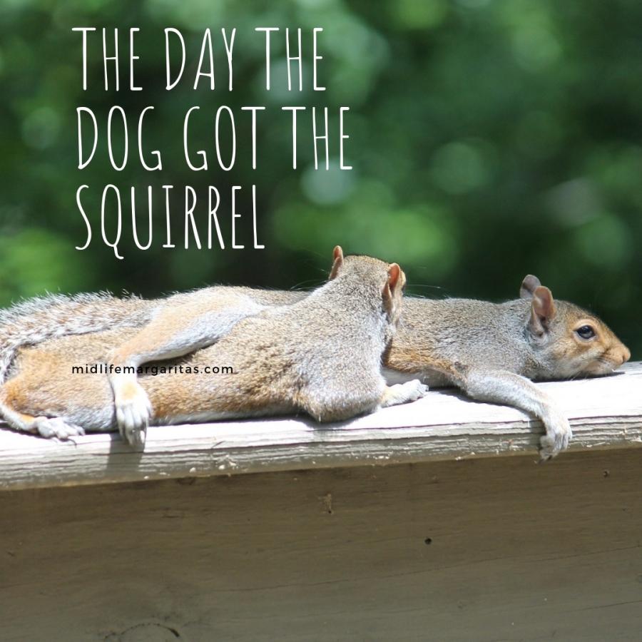 Squirrel – 0  Dog –1